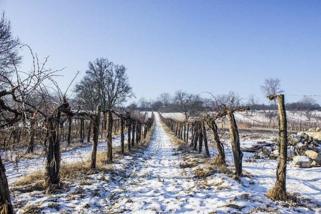 behind-budapest-etyeki-piknik-what-to-do-in-january